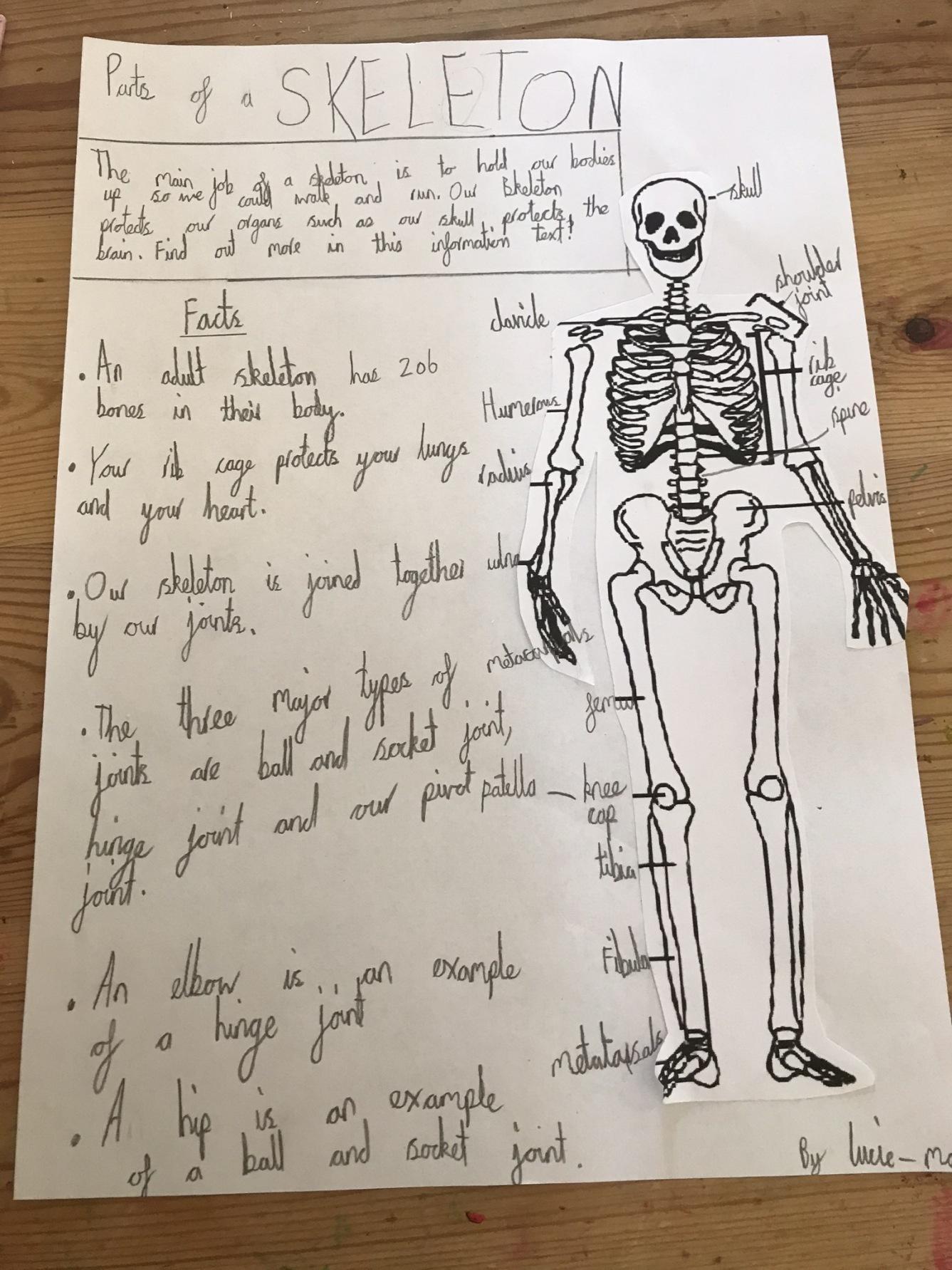 Skeleton-info-text